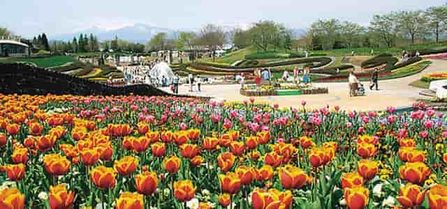 セフレ掲示板【宮城県でセフレ募集するなら】-国営みちのく杜の湖畔公園